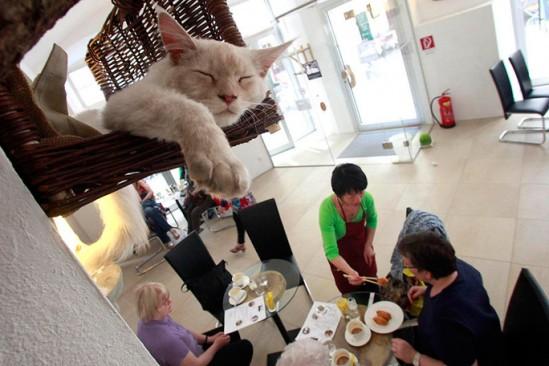 Coffee Shop que acepte mascotas como idea de negocio