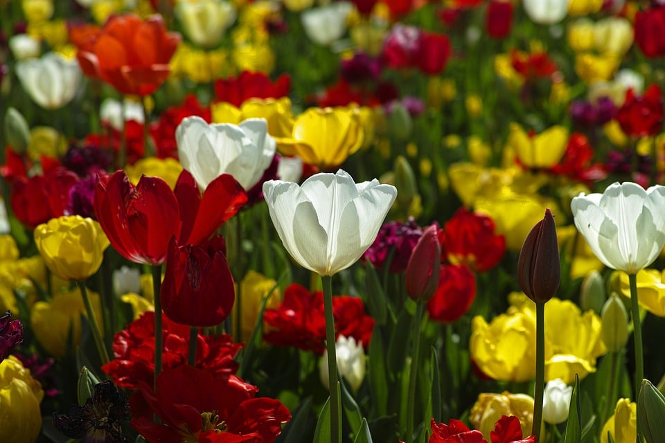 Cómo vender flores ¡Gran Negocio! II PARTE