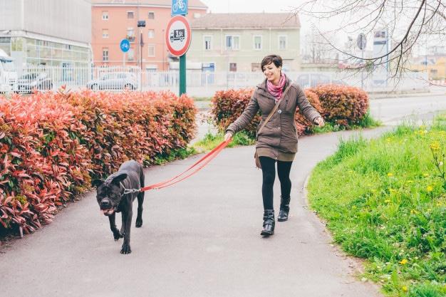 Paseo de perro.