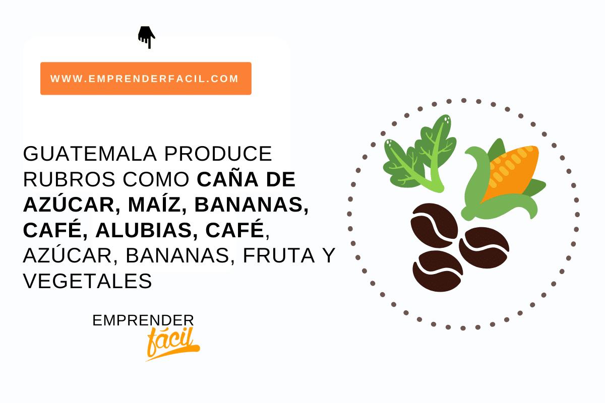 Guatemala produce caña de azúcar, maíz, bananas, café...